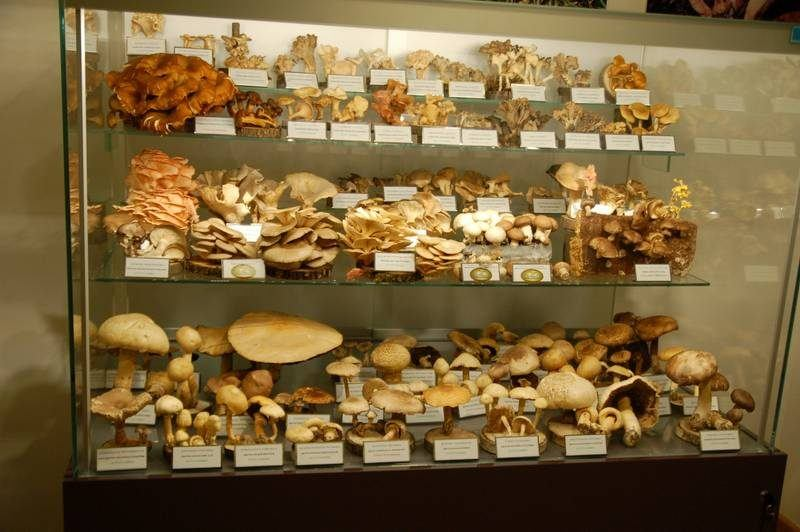 At this museum of mushrooms, what can kill you is just a few centimeters away ()